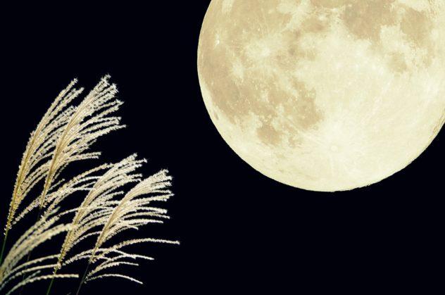 仲秋の名月とススキ
